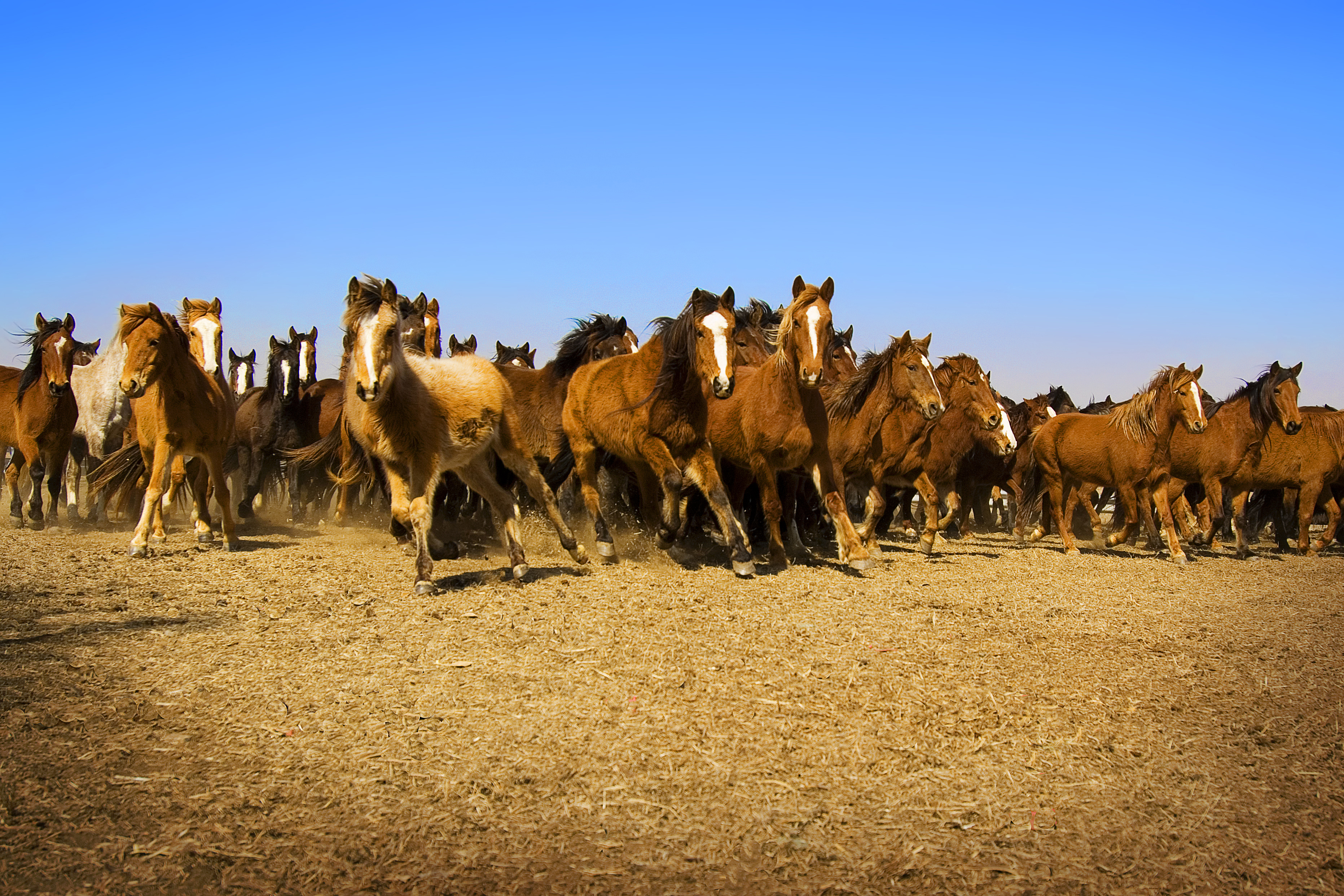 Charging Colts by Ree Drummond, www.thepioneerwoman.com