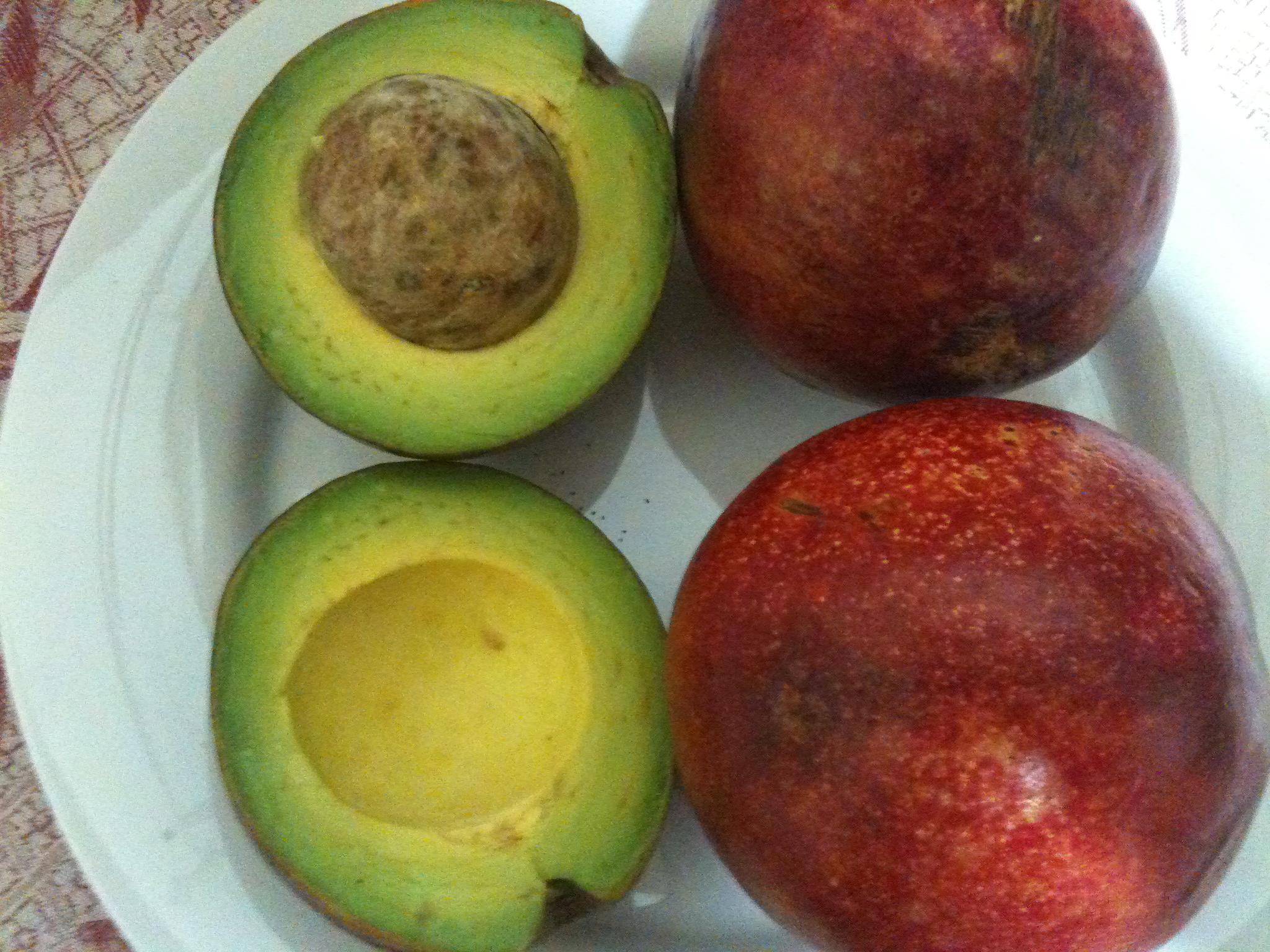 From My Grand Bahama Garden: RED Avocados!   Paula's Paradise