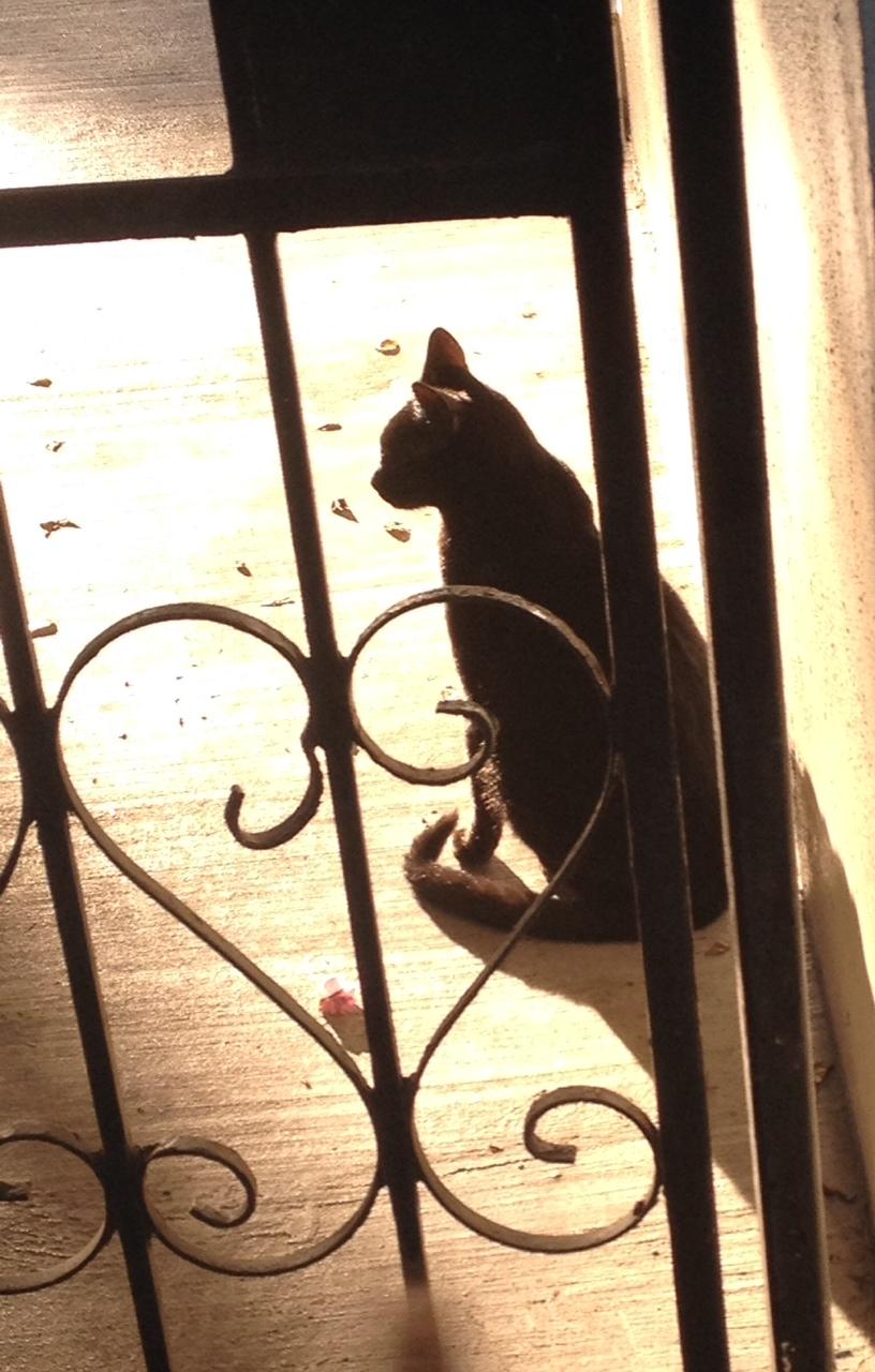 cat.w.sun.glinting